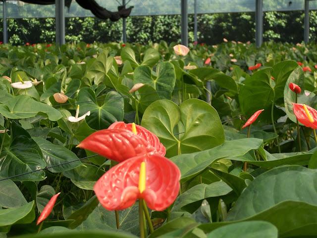 Cultivo de plantas de interior. - 100_0222.JPG
