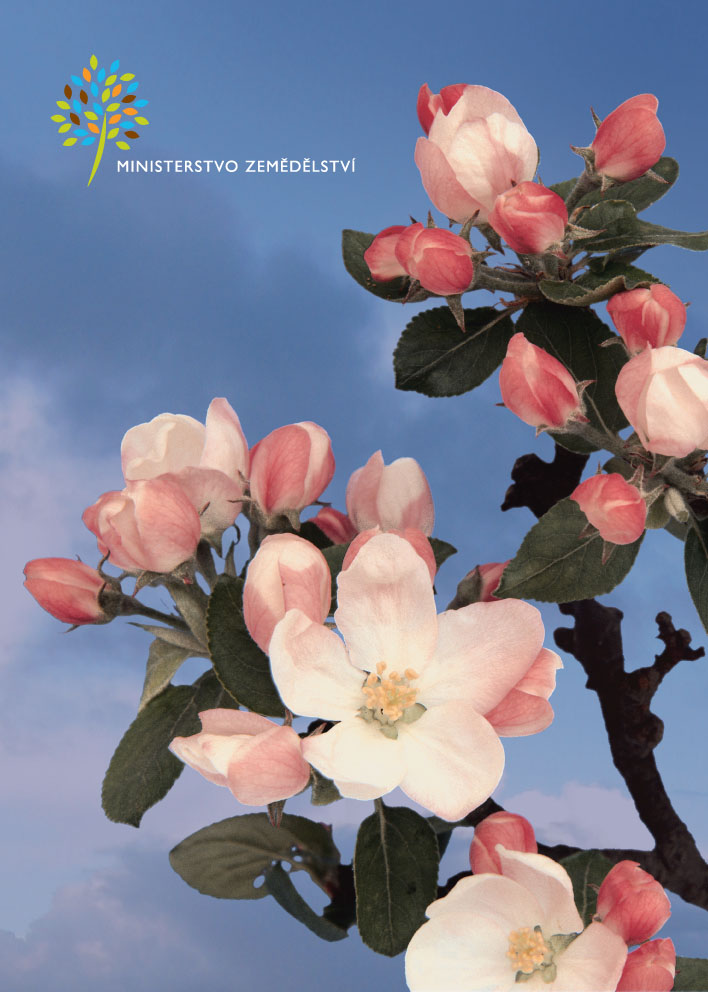 kvet_001-4
