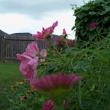 Gardening 2010, Part Three - 101_3588.JPG
