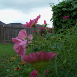 Gardening 2010, Part Three - 101_3588.JPG