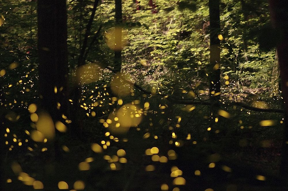 synchronous-fireflies-5