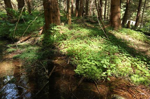 Les pri potoku