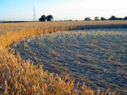 New Crop Circle Was Found At Standals Farm Nr Bishopstone In Buckingham Uk