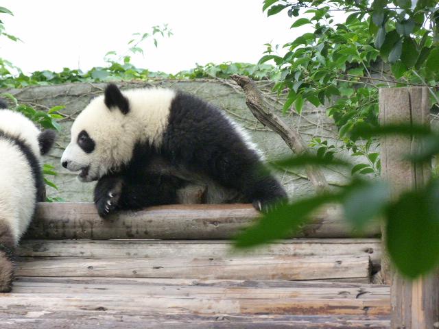 CHINE.SICHUAN.CHENGDU ET PANDAS - 1sichuan%2B266.JPG