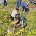 Sebagai Upaya Pelestarian Alam Danramil Kretek Ikut Tanam Mangrove