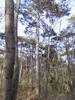 Mac Gyver Cache am Baum kaum zu erkennen