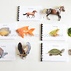 A Walkthrough of Animal Study for Preschoolers