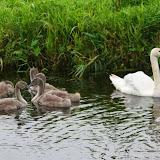 Vogels en dieren - IMG_9182.JPG