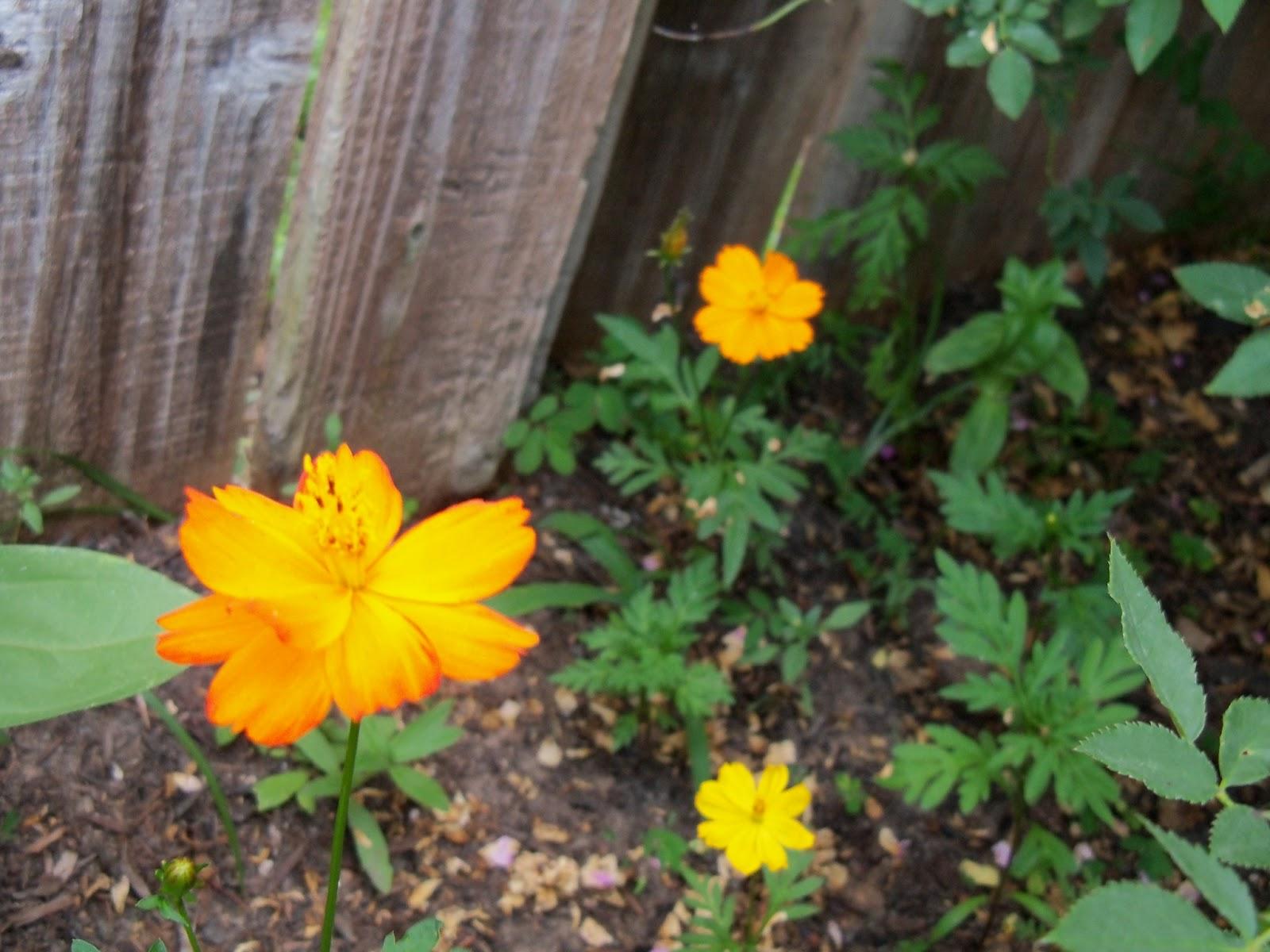 Gardening 2012 - 115_1828.JPG