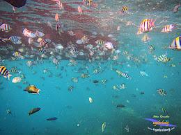 pulau harapan 8-9 nov 2014 diro 31