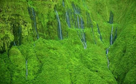"""Ένα σπάνιο θέαμα της φύσης : ο καταπράσινος """"τοίχος των δακρύων"""" στη Χαβάη"""
