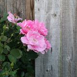 Gardening 2012 - IMG_2788.JPG