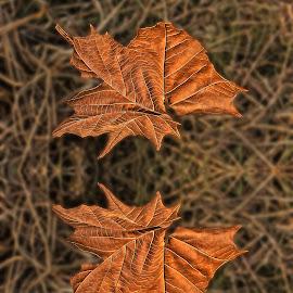 Een bruin Blaar by Elna Geringer - Nature Up Close Leaves & Grasses