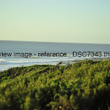 _DSC7343.thumb.jpg