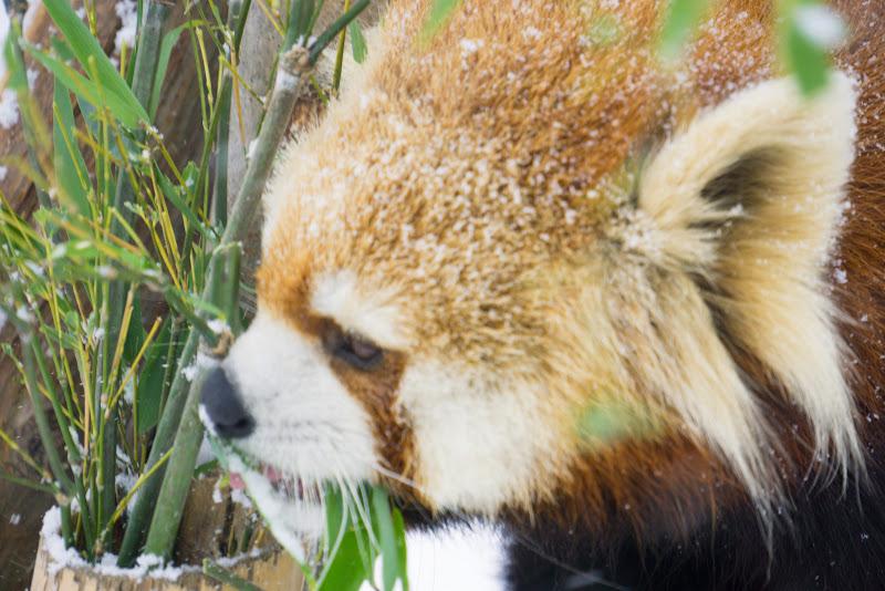 札幌 円山動物園 写真10
