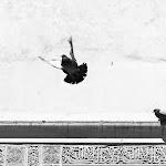 Alhambra - Juan Manuel Maroto.jpg