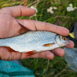 20140823_Fishing_Lysyn_012.jpg