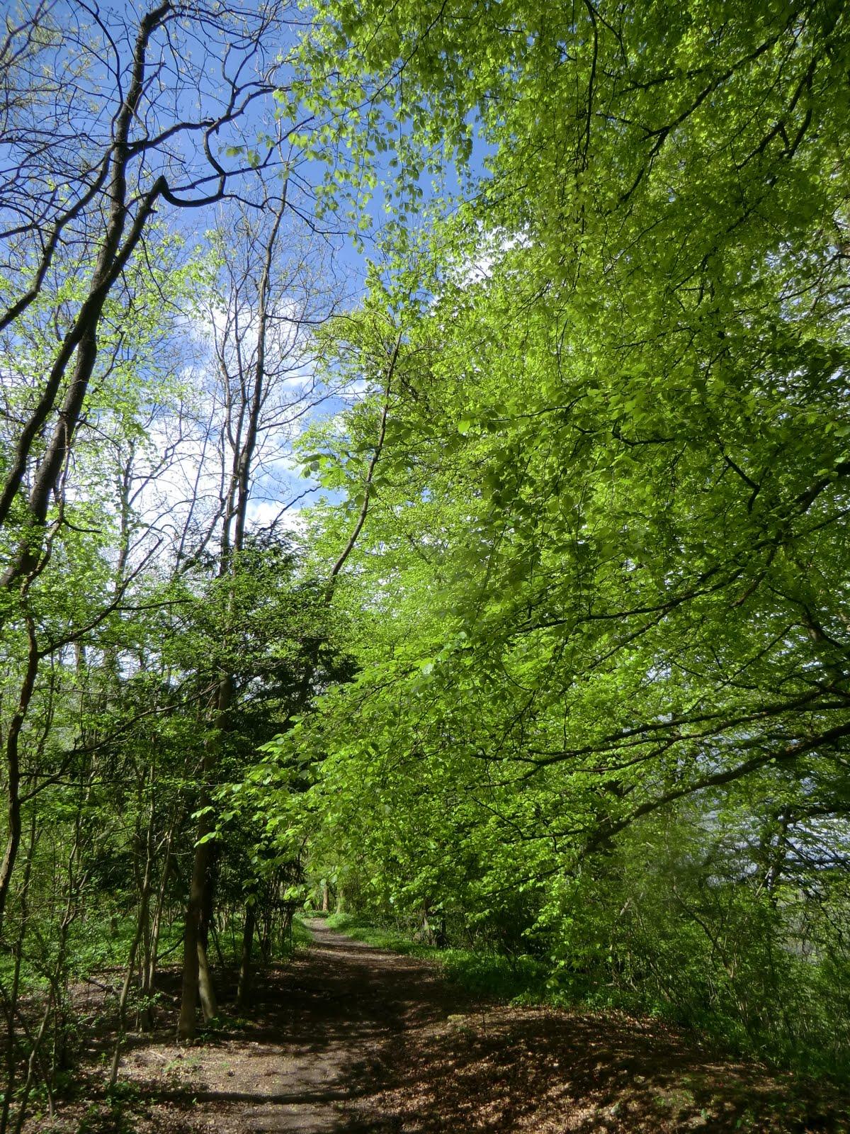 CIMG8008 Marden Park Woods