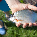 20150606_Fishing_Lysyn_016.jpg
