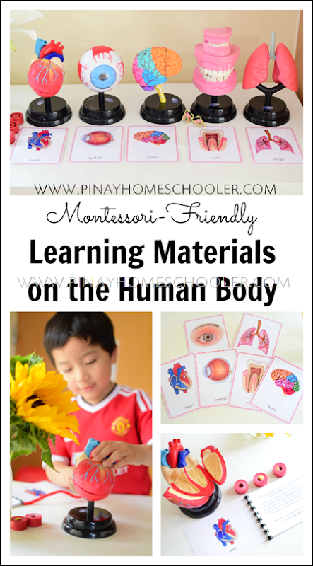 Human Body Montessori-Friendly Learning Materials