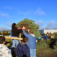 Christmas Tree Pickup 2014 - DSC_0080.jpg