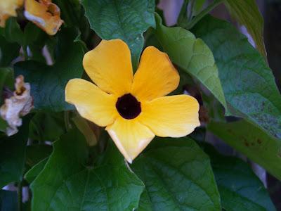Fleurs annuelles plein soleil en pot - Fleurs d ete plein soleil ...