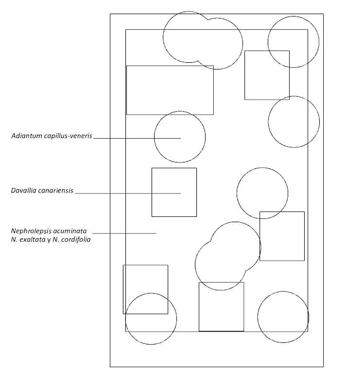Esquema de plantación de la segunda opción jardín vertical interior barcelona listado especies leaf.box