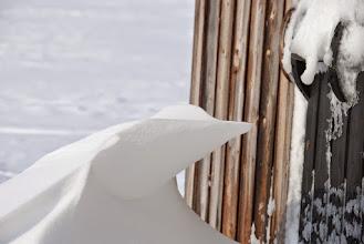Kuva: Tuulen ja lumen muovaama lumilintu