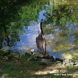 04-07-12 Homosassa Springs State Park - IMGP0055.JPG