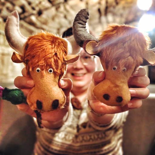 Highland Cow Week