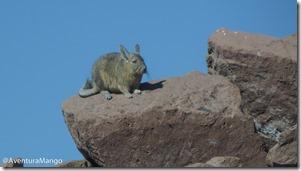Viscacha 2