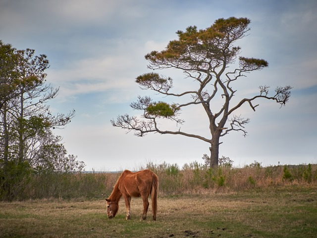 assateague 15