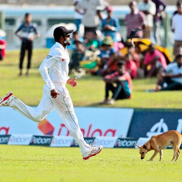 Sri Lankan cricketer Lahiru Thirimanne runs to collect the ball as a stray dog walks in the field during the first day of the first test cricket match between Sri Lanka and South Africa in Galle, Sri Lanka, Wednesday, July 16, 2014.