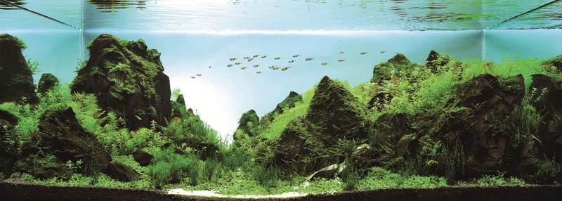 Hinh anh: Loi thi tham cua nui Vuon toi dinh cao 127x60x50 cm