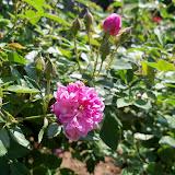 Gardening 2011 - 100_7897.JPG