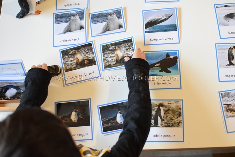 Montessori Animals of Antarctica 3 Part Cards and Fact Cards