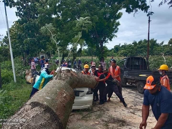 Pohon Tumbang Timpa Mobil Akibat Angin Kencang