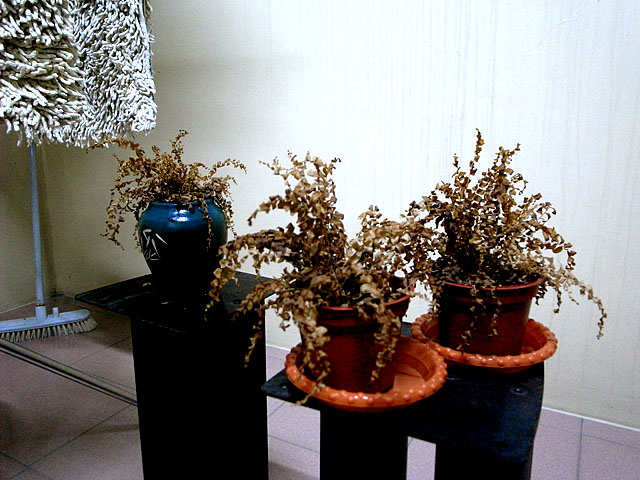 空中花園難產中,先玩盆栽解解饞。