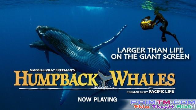 Xem Phim Cá Voi Lưng Gù - Humpback Whales - phimtm.com - Ảnh 1