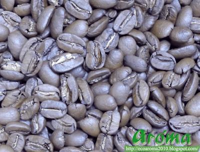 aroma精品咖啡_巨型象豆生豆