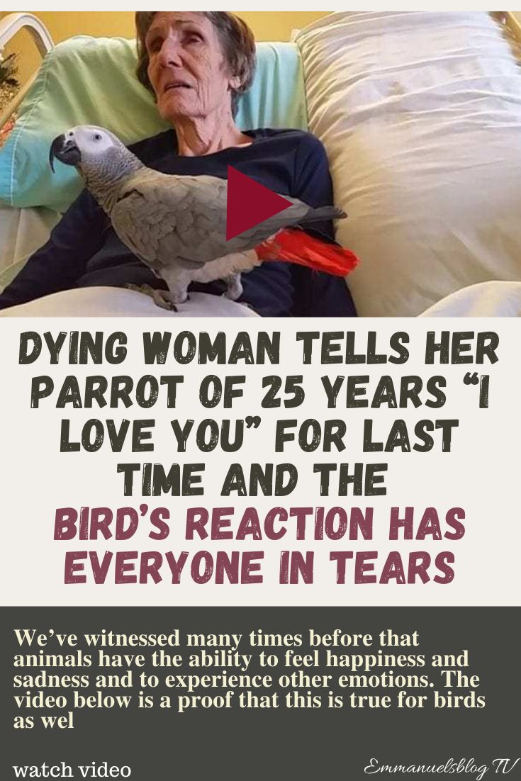"""Dying Woman Tells Her Parrot Of 25 Years """"I Love You"""" For Last Time And The Bird's Reaction Has Everyone In Tears"""