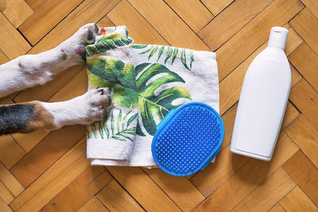 Dog accessories that will help you groom your dog effortlessly