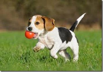 L'importanza del gioco per il cane