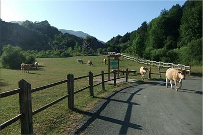 Las vacas, cortan el césped y abonan el terreno