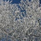 tn_lachaux-2010-12-36.jpg