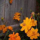 Gardening 2011 - 100_8756.JPG