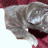 black girl w/white star @ 2 weeks/available