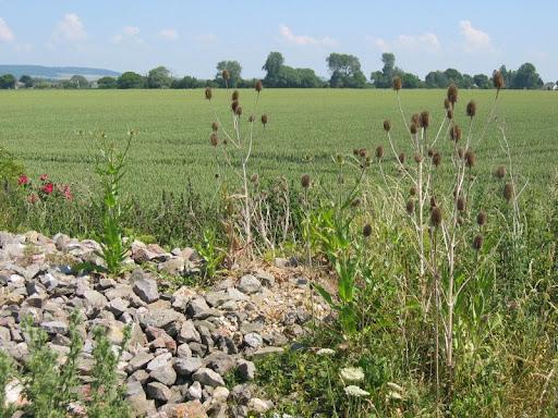 stones, corn and dry flowers