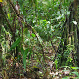 Dans la forêt. Tunda Loma à Calderon (Esmeraldas), 6 décembre 2013. Photo : J.-M. Gayman