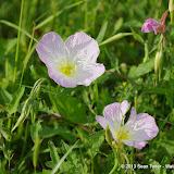2013 Spring Flora & Fauna - IMGP6324.JPG